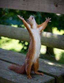 squirrel-cursing-the-bond-markets